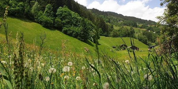 Aussicht hinter dem Hause/Versettla Talstation