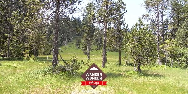 Typisch für die Moorlandschaft Ibergeregg ist die Verzahnung von Wäldern und Mooren.