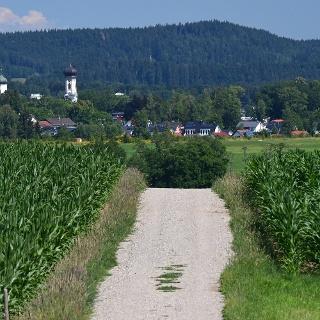 Wegn nach Isny mit Maisfeldern