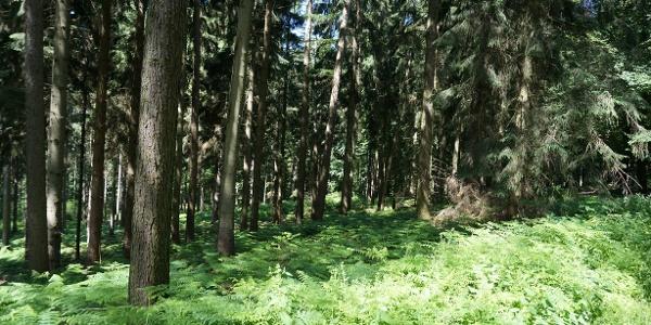 TERRA.track Hünnefelder Tannen - Im Wald bei Bad Essen