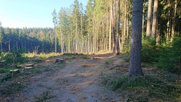 Foto Weg ins Weißbachtal
