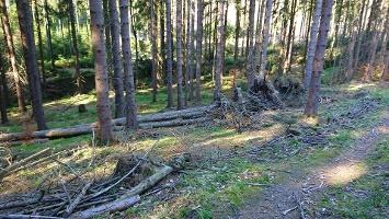 Foto Abzweig von Forstweg zum Weißbach