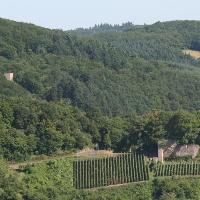 Burgen Wolfstein