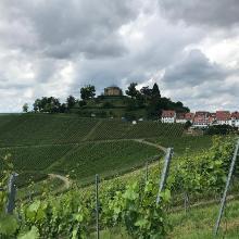 Rotenberg mit Weingärten