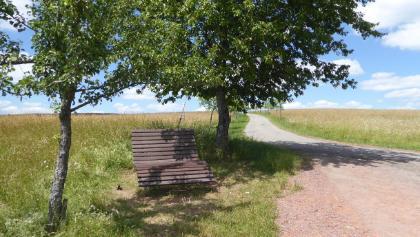 Auf der Steigerung nach Scheiden, kurz unterhalb der Obstbäumenpflanzung.