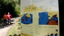 Der geologische Lehrpfad Sipplingen - 22 Millionen Jahre Erdgeschichte