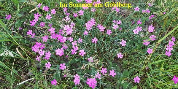 Sommer am Göblberg