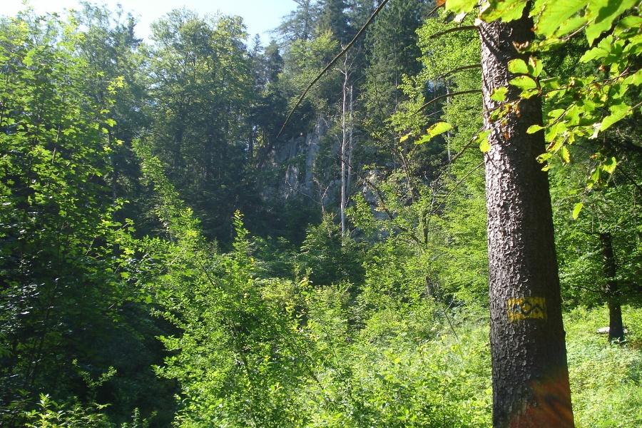 Der Aufstieg führt größten Teils durch den Wald