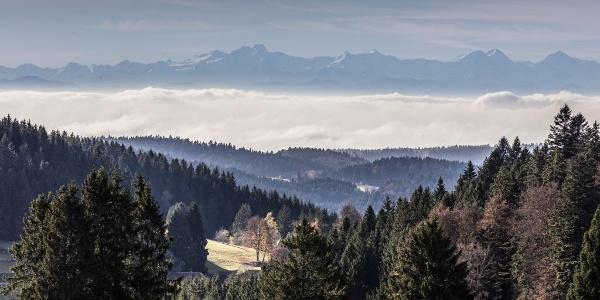 Aussicht Hotzenwald
