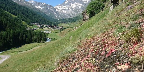 Eingebettet zwischen saftigen Wiesen und umringt von majestätischen Berggipfeln der Ötztaler Alpen und der Texelgruppe liegt im hinteren Passeiertal das Bergdorf Pfelders. Im Hintergrund die imposante Hohe Wilde (oder Hochwilde - 3.460m).