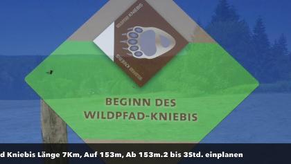 Wildpfad Kniebis .