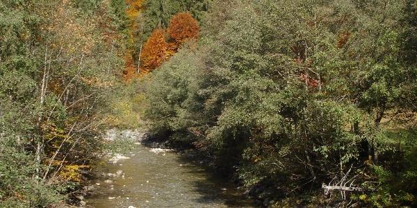 Bolgenach im Herbst