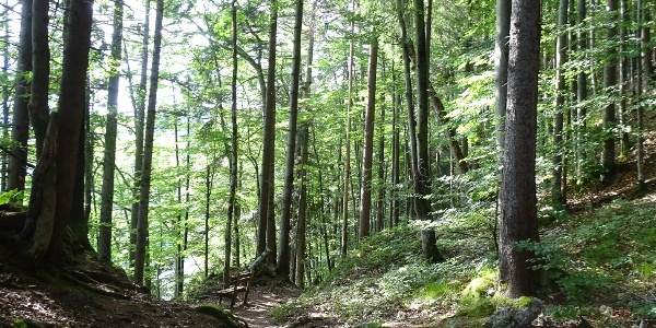 Waldweg zum Alatsee