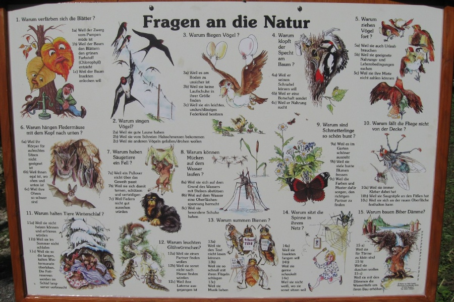 Wandern von Brannenburg aus - Naturerlebnispfad im Brandl