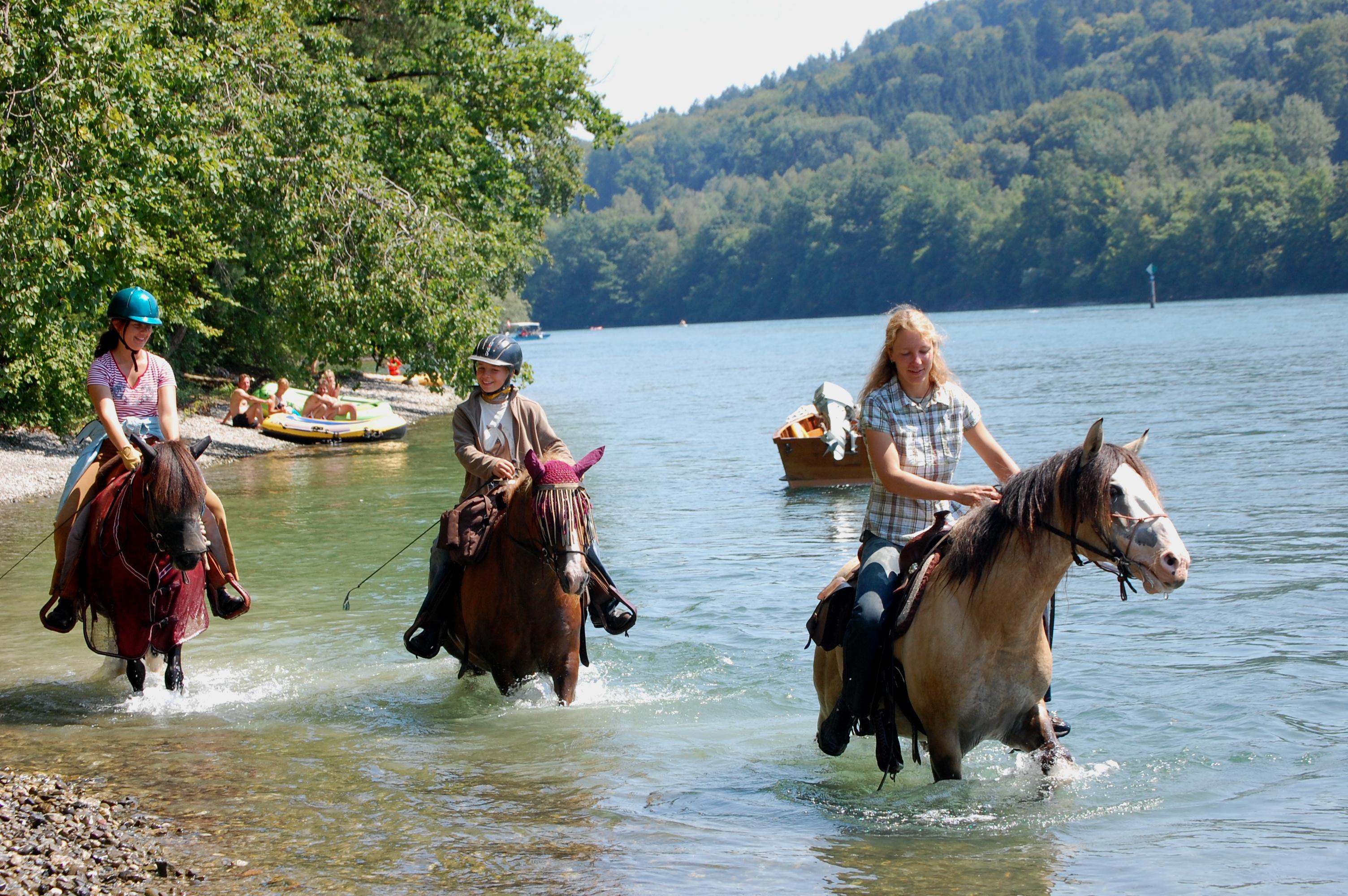 Pferdebad im Rhein