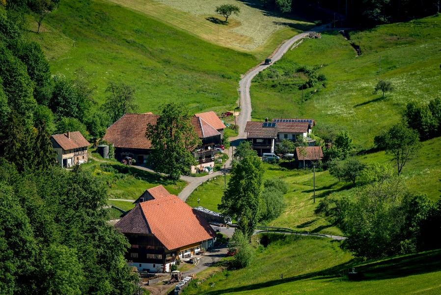 Wolfach - Moosenmättle-Höhentour