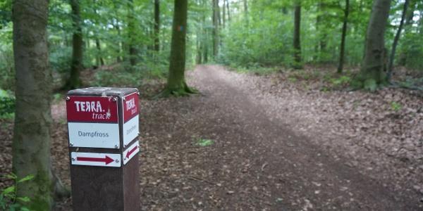 TERRA.track Dampfross - Im Wald bei Ostercappeln