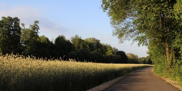 Guldenbachradweg