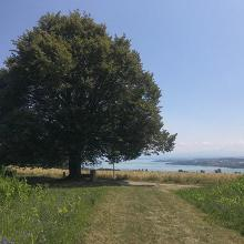 Überlinger See