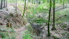 Trailrunde durch den Welzheimer Wald