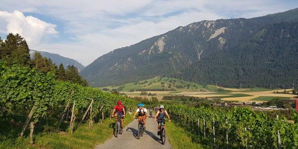 Aufstieg durch die Weinreben oberhalb Felsberg