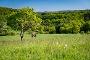 Zwei Wanderer auf der grünen Wiese