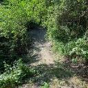 Knackige Passage im Single Trail.