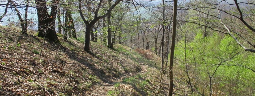 Schöne Trails im Südharz