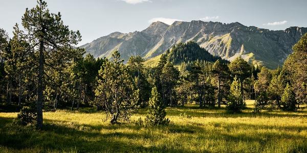 Wandern durch wunderbare Moorlandschaften