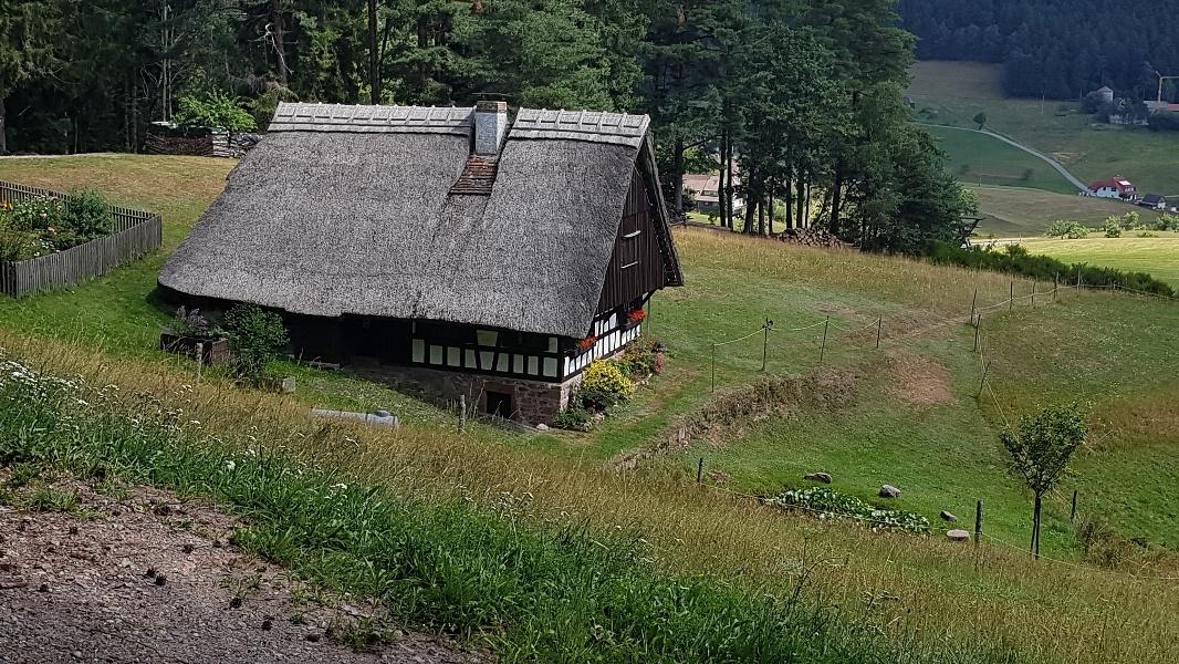 Schiltach: Mooswaldkopf-Fohrenbühl-Tour