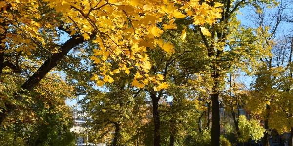 Herbstimpressionen im Lutherpark