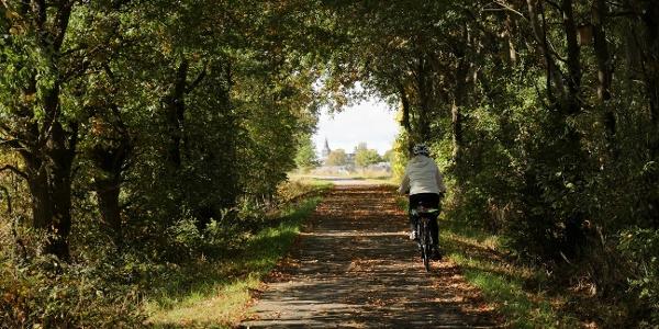 Schinderhannes-Radweg - Kurz vor Lingerhahn