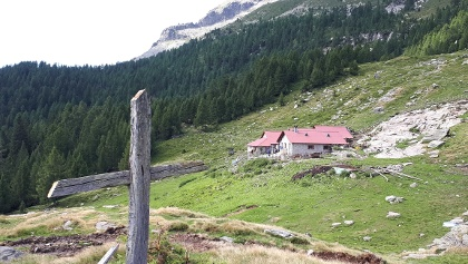 Alp de Naucal (1805 m)