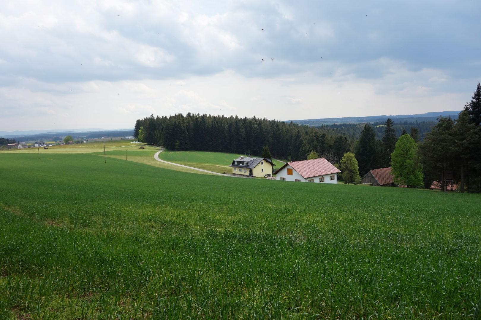 Breitreute