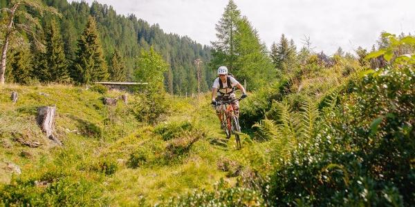 Bike-Trail-Maibrunn