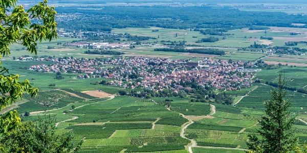 View to Eguisheim