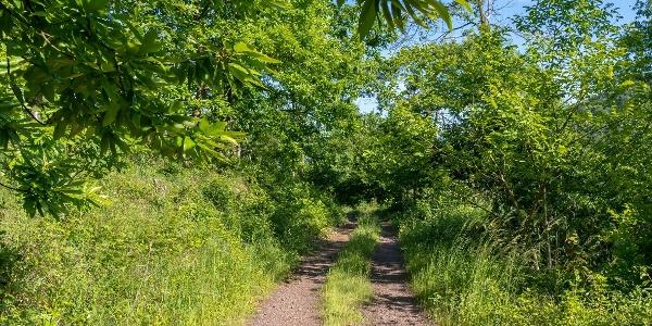 wandern parallel mit dem Maronenweg