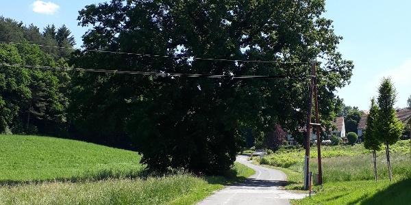 Eine alte Eiche ziert den Wanderweg