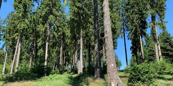 Kleiner Rothaar - Der Weg durch den verwunschenen Wald