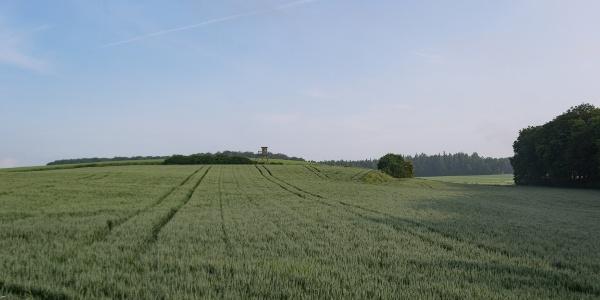 Blick über Roggenfeld