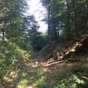 Ein Hohlweg am Eisenberg