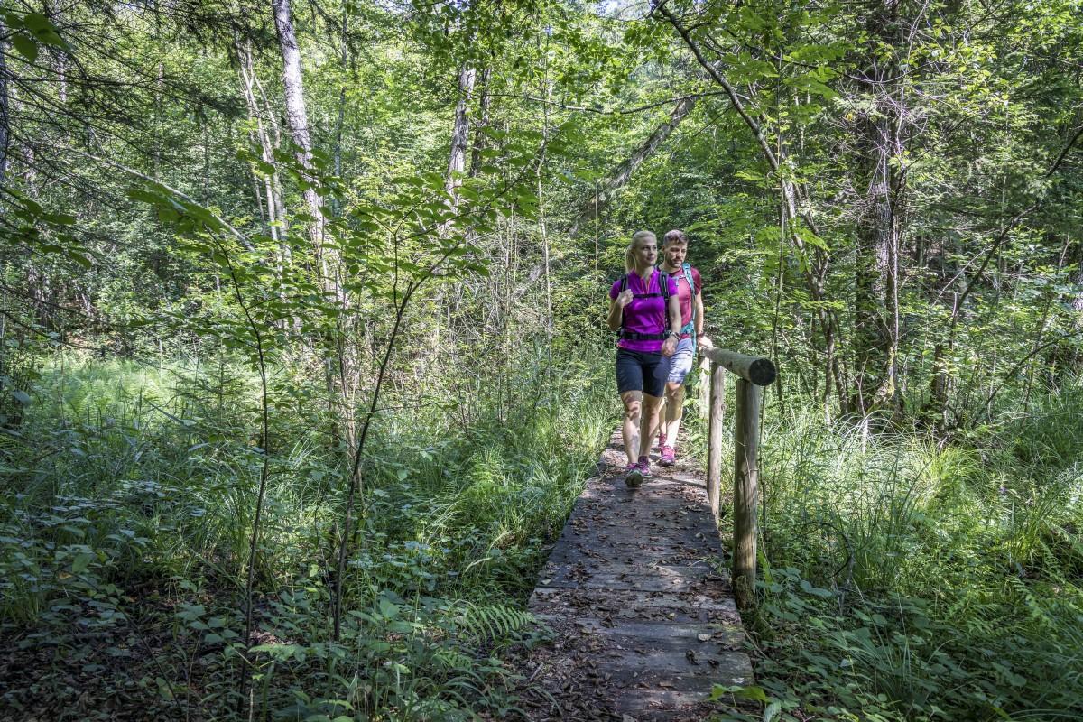 Wandern in den Wäldern der Eggstätt-Hemhofer Seenplatte