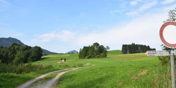 Feldweg in Richtung Vorder-/Hinteregg