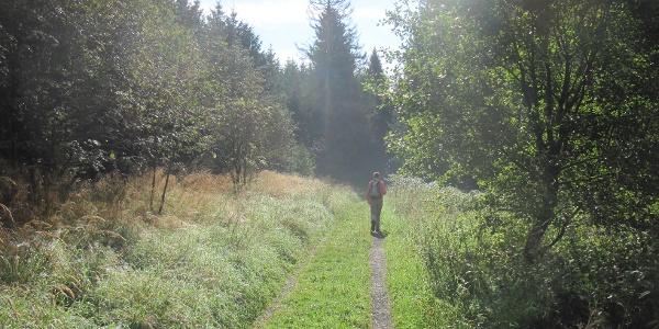 Wanderer auf dem Rothaarsteig