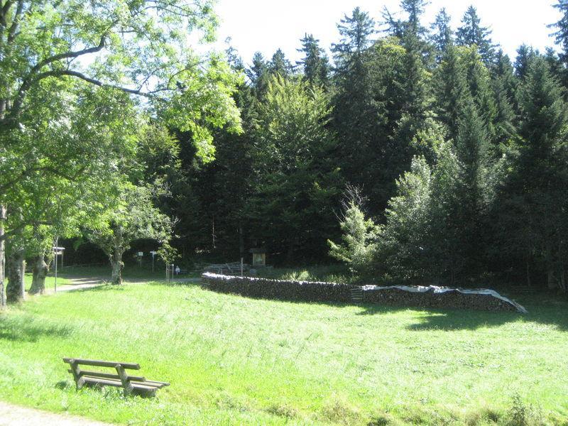Pfisterwald-Waldlehrpfad-Runde