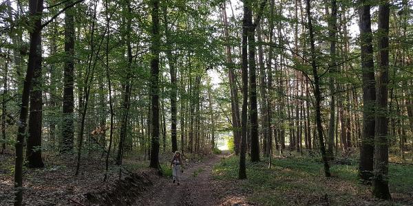 Durch den Wald über den Distelberg