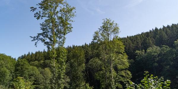 Ausblick über Baumkronen
