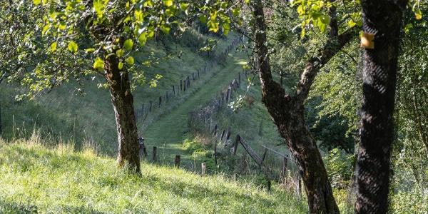 Obstbäume am Wanderweg