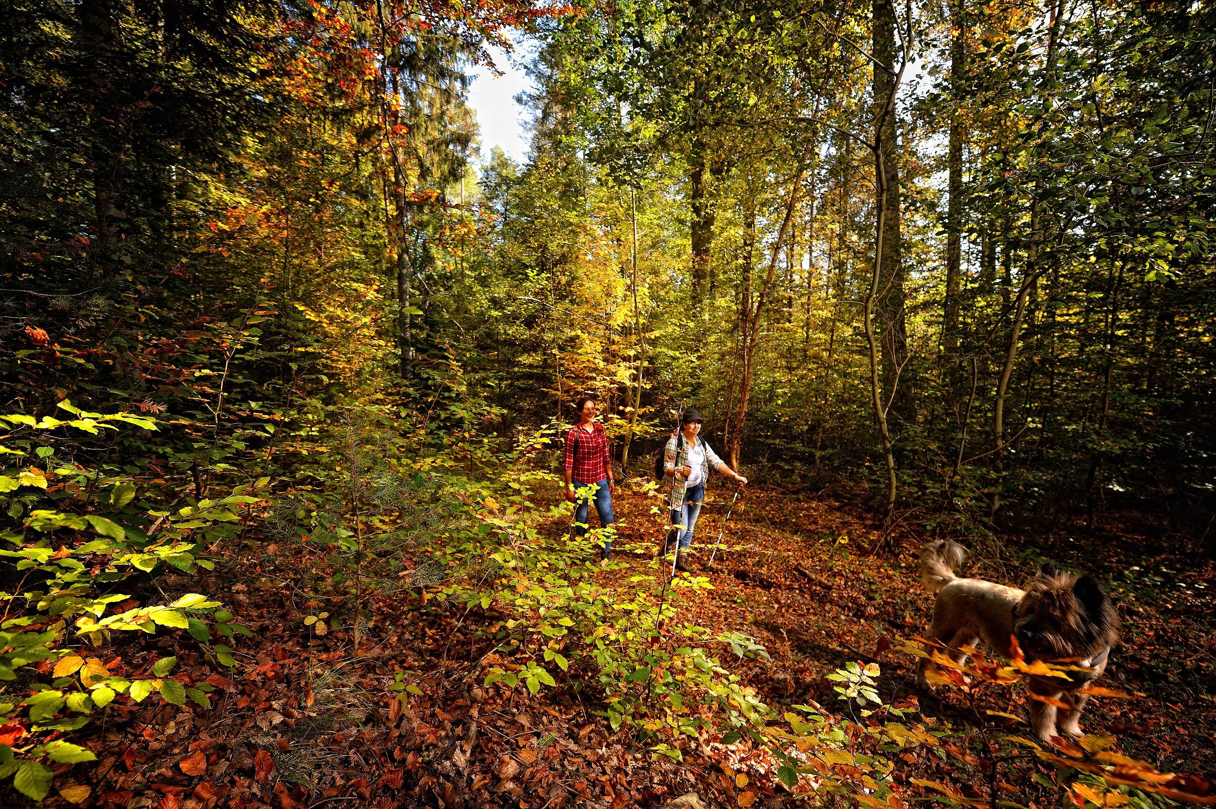 Wandern mitten durch den Wald