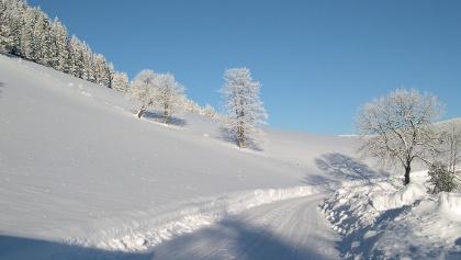 Winterwandern in Falkenstein